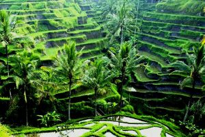 Paket Bali Tour